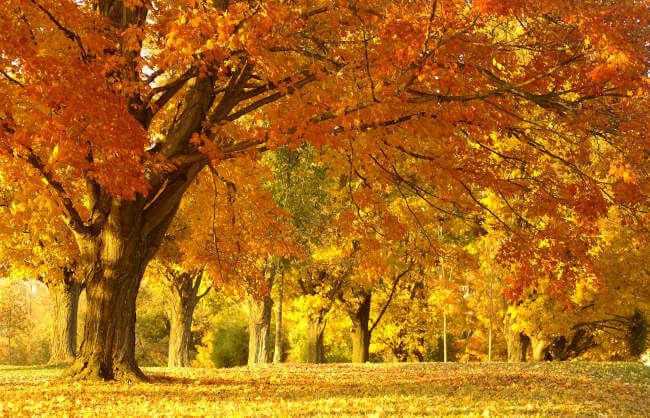 Złota jesień w ośrodku Gawra na Mazurach